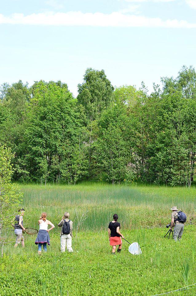 Trollsländor på Tjörn, Bohuslän @ Sannemyran, Tjörn