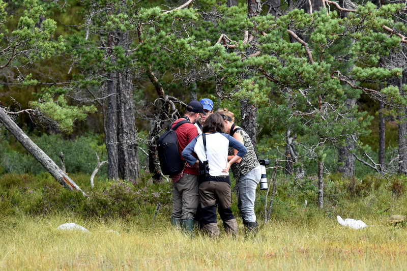 Trollsländor vid Store Mosse @ Naturum, Store Mosse Nationalpark