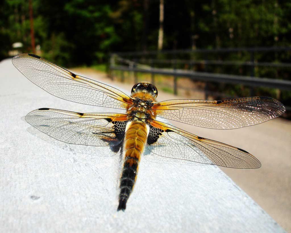 Trollsländor och fjärilar, Nedre Lia, Halland